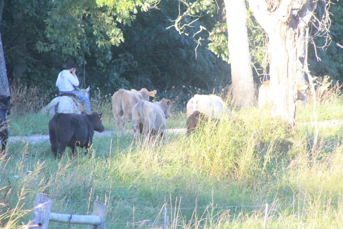 Blog Archives Eden Shale Farm